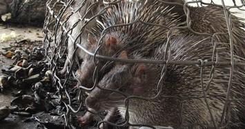 Nhiều cá thể động vật rừng quý hiếm chết dần chết mòn vì 'vướng thủ tục'