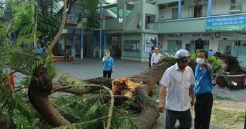 Cây phượng bật gốc lúc sáng sớm khiến gần 13 học sinh bị thương, 1 em đã tử vong