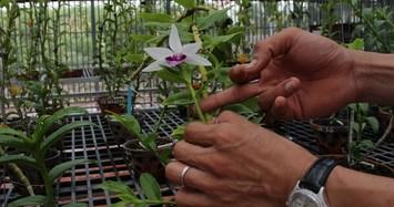 Mua 3 cây lan đột biến gene giá 32 tỷ, người thật việc thật ở Bình Phước