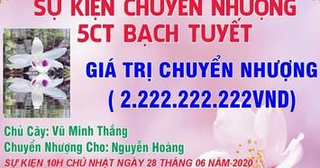 Dân chơi Hưng Yên chuyển nhượng 2 chậu lan Bạch Tuyết giá 2,6 tỷ đồng