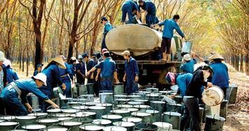 Cao su Tây Ninh báo lãi trong quý 1 tăng 14%