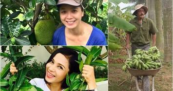 Vườn trái cây hàng nghìn m2 của sao Việt