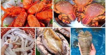 5 loại hải sản đắt đỏ ở các vùng biển đảo Việt Nam