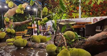 Ngắm quán cà phê được xây dựng quanh cây mít trĩu quả
