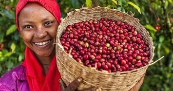 Giá cà phê hôm nay 21/11: Tiếp đà giảm, giá tiêu mức thấp nhất còn 54.500 đồng/kg