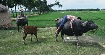 Cuộc sống thân thương ở nông thôn Việt Nam đầu thập niên 1990