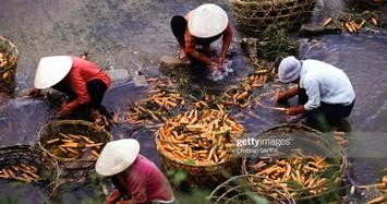 Những hình ảnh đẹp về Việt Nam đầu thập niên 1990