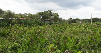 Một phần khu đất 158 ha thuộc dự án Khu nhà ở của Công ty cổ phần Sài Gòn Gôn tại phường Long Trường, quận 9. Ảnh: Vnexpress