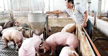Công ty nuôi heo ở Hà Tĩnh muốn chia cổ tức tiền mặt hơn 67%
