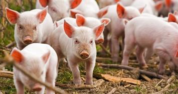 Công ty nông nghiệp ở Đồng Nai tăng cổ tức lên 40% sau khi báo lãi lớn
