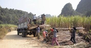 Thành viên HĐQT Mía đường Cao Bằng bị phạt do chậm báo cáo giao dịch cổ phiếu