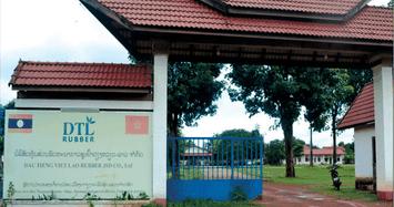 XNK Bình Dương muốn gom thêm hơn 10% vốn Cao su Dầu Tiếng Việt Lào