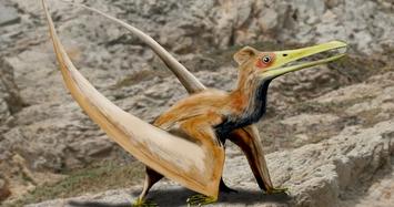 Sửng sốt thằn lằn bay Ptero biết cất cánh ngay khi chào đời