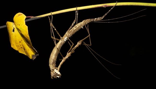Những động vật kỳ dị ở rừng Cúc Phương dưới ống kính nhiếp ảnh gia Australia