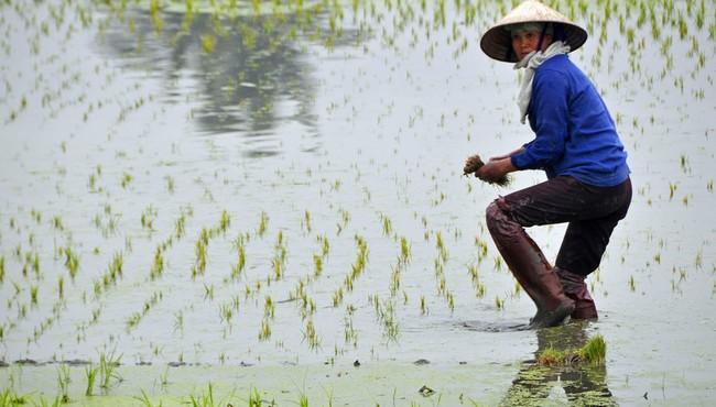 Người Việt đội nón lá dưới con mắt du khách ngoại