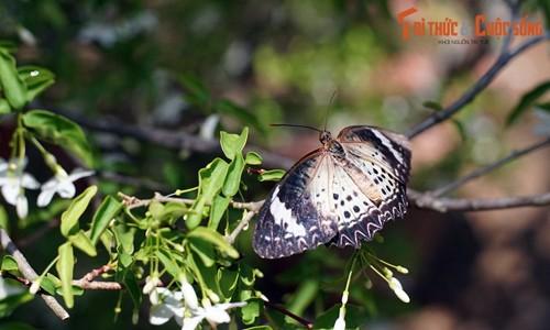 Trang trại bướm nổi tiếng thế giới của Malaysia