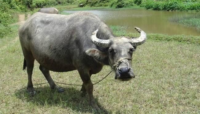 Tử vi ngày 03/09/2021 cho 12 con giáp: Mão khó khăn, Mùi rủng rỉnh