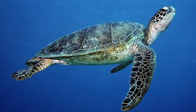 Cận cảnh rùa quý hiếm sa lưới ở Huế