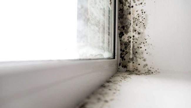 Cách xử lý nấm mốc khắp nhà để không hít phải độc