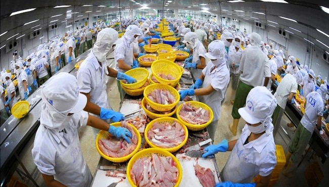 Vĩnh Hoàn: Lãi quý 3 giảm 40%, khoản đầu tư chứng khoán gần 130 tỷ đồng