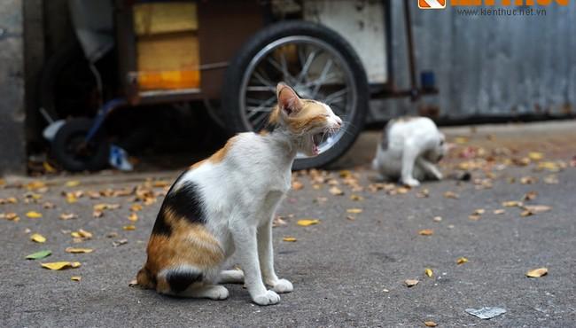 """Biết gì về con mỉu trong câu """"Chưa biết mèo nào cắn mỉu nào""""?"""