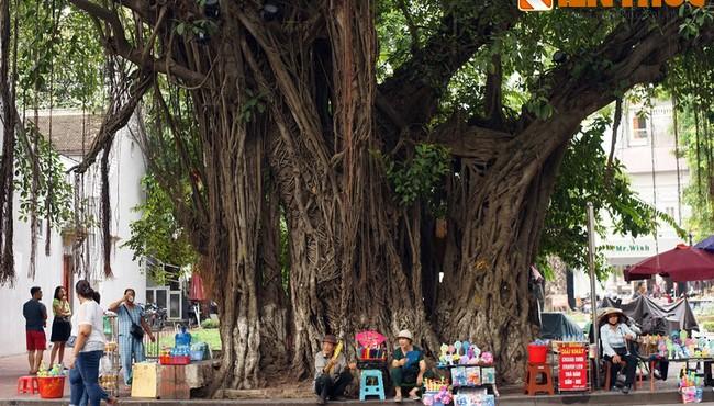 Nguồn gốc quan niệm 'cây đa có thần' của người Việt xưa