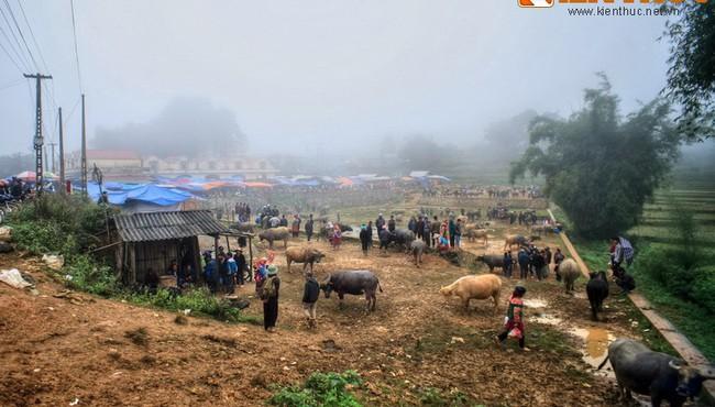 Phiên chợ trâu độc đáo ở Sín Chéng