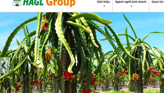 Bầu Đức lên kế hoạch lãi hơn 100 tỷ năm 2021 nhờ chăn nuôi và trái cây
