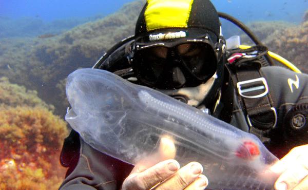 Khám phá 'báu vật đại dương' cực độc lạ