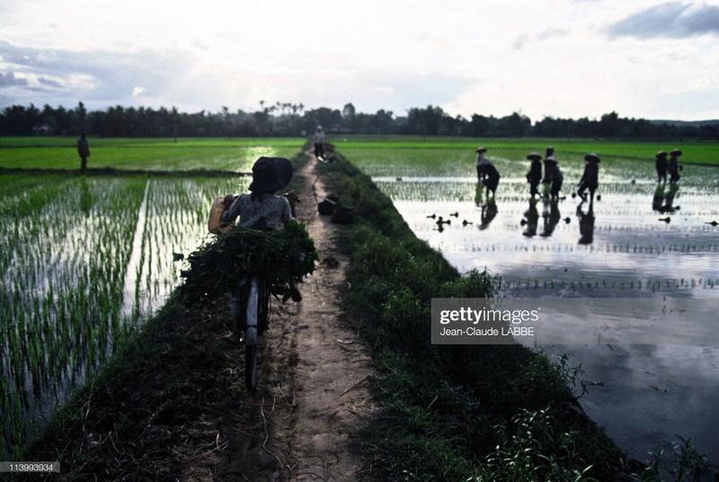 Cuoc song than thuong o nong thon Viet Nam dau thap nien 1990-Hinh-11