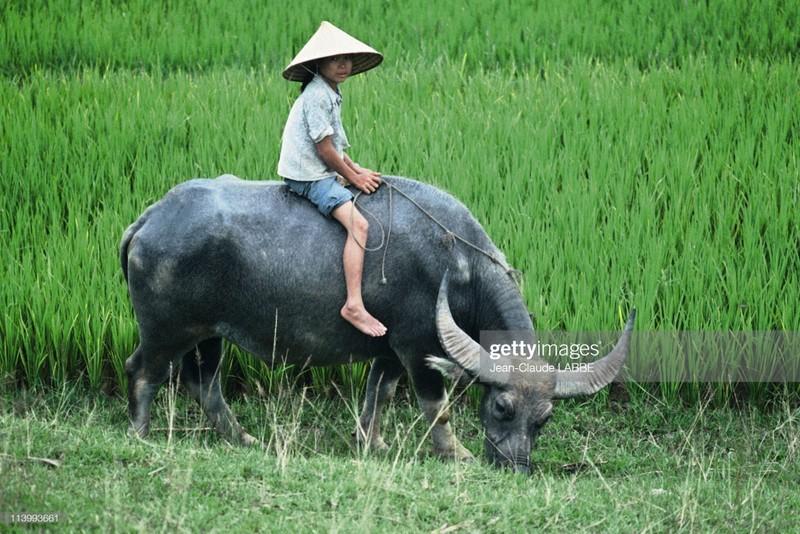 Cuoc song than thuong o nong thon Viet Nam dau thap nien 1990-Hinh-12