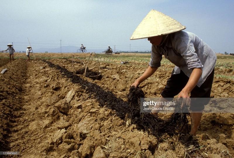 Cuoc song than thuong o nong thon Viet Nam dau thap nien 1990-Hinh-13