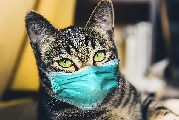 CDC Trung Quoc: Cac loai nhiem SARS-CoV-2 trong tu nhien gia tang kho kiem soat-Hinh-9