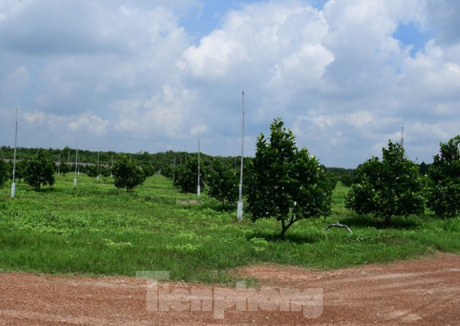 Binh Duong lap doan thanh tra nong trai rong gan 153 ha dat-Hinh-2