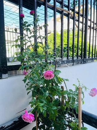 Can canh can nha mat pho day hoa cua Ho Bich Tram-Hinh-6