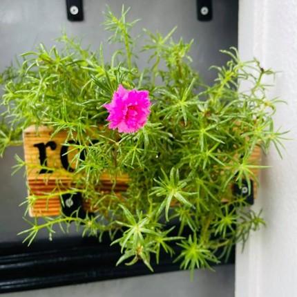 Can canh can nha mat pho day hoa cua Ho Bich Tram-Hinh-8