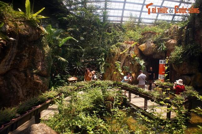 Lac loi trong trang trai buom noi tieng the gioi cua Malaysia-Hinh-10