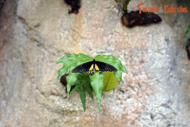 Lac loi trong trang trai buom noi tieng the gioi cua Malaysia-Hinh-5