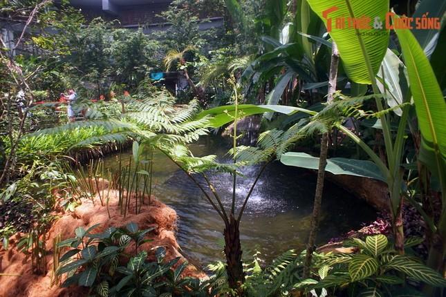 Lac loi trong trang trai buom noi tieng the gioi cua Malaysia-Hinh-7