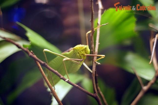 Lac loi trong trang trai buom noi tieng the gioi cua Malaysia-Hinh-8